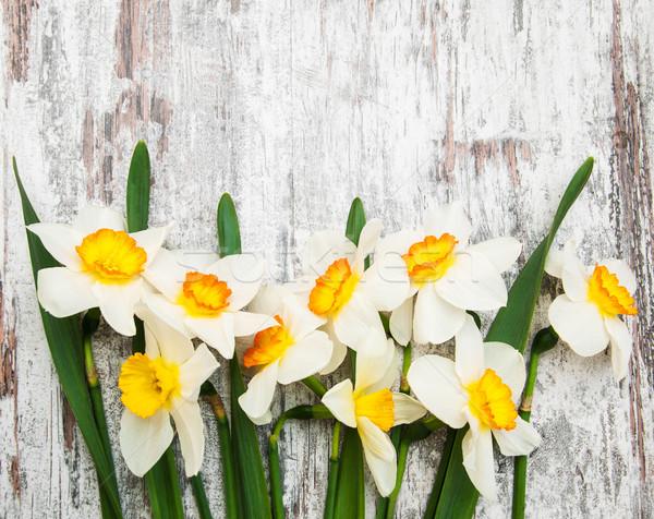 Daffodil цветы старые весны оранжевый Сток-фото © Es75