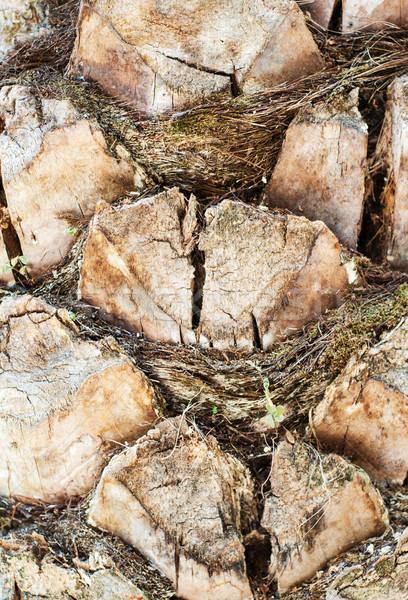 écorce palmier texture nature fond Voyage Photo stock © Es75
