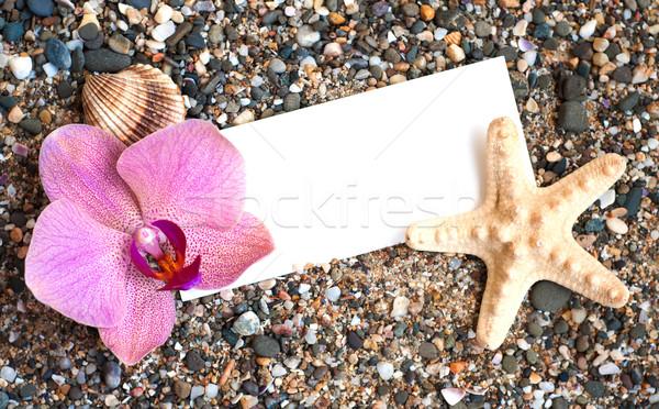 üres papír tengerparti homok kagylók orchidea virág papír Stock fotó © Es75