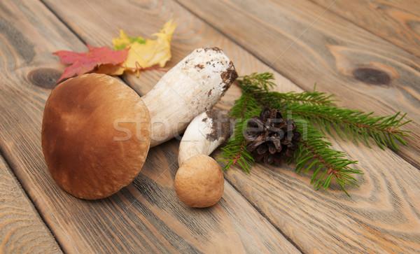 Boletus funghi vecchio legno texture legno Foto d'archivio © Es75