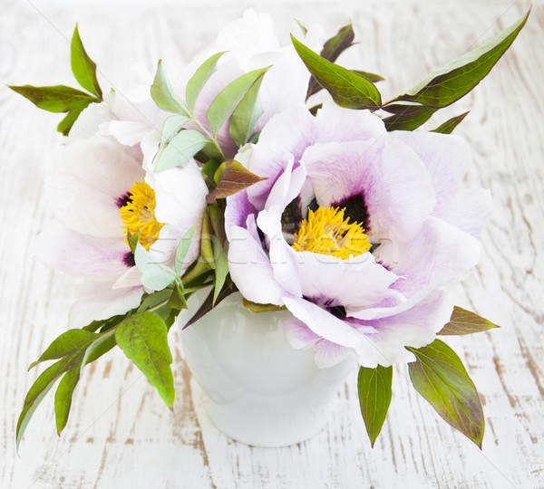 Peony Flower with Green Leaves Stock photo © Es75
