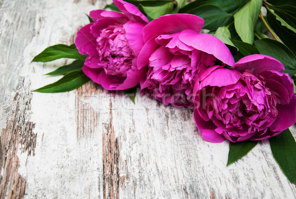 floral frame with pink peonies Stock photo © Es75