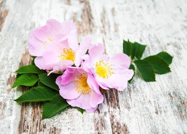 Cane rosa vecchio legno primavera amore Foto d'archivio © Es75