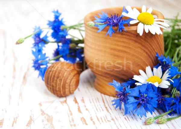 лист синий Daisy завода белый букет Сток-фото © Es75