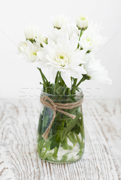 White Chrysanthemum Stock photo © Es75