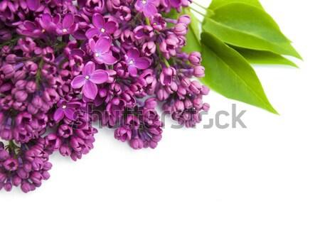 çiçekler mor beyaz ağaç bahçe Stok fotoğraf © Es75