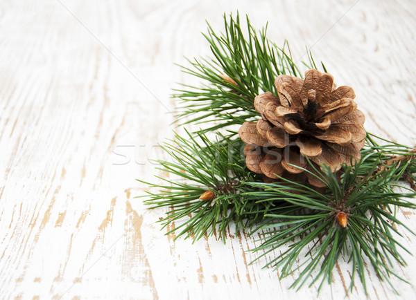 Pine cone Stock photo © Es75