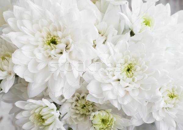 Fehér krizantém virágcsokor közelkép virág tavasz Stock fotó © Es75