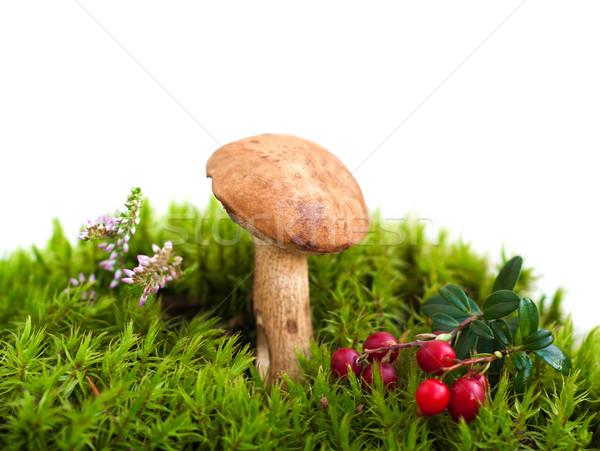 Floresta cogumelo musgo comida verão vermelho Foto stock © Es75