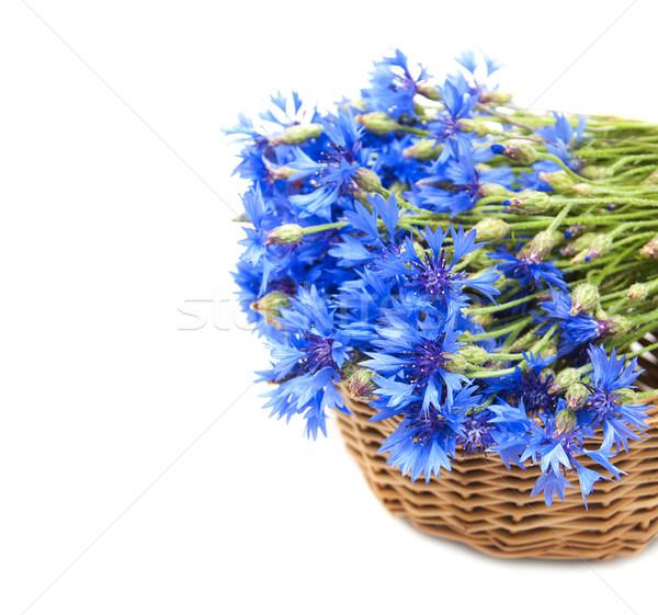 Bukiet niebieski kwiaty liści piękna lata Zdjęcia stock © Es75
