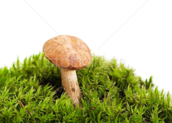 Floresta cogumelo musgo branco comida verão Foto stock © Es75