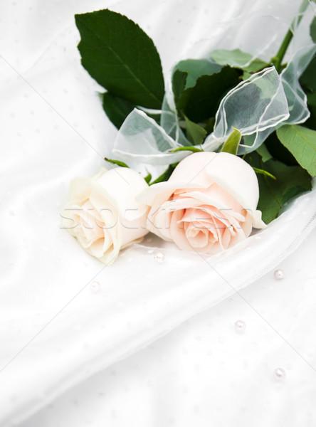 玫瑰 白 絲綢 二 花卉 質地 商業照片 © Es75