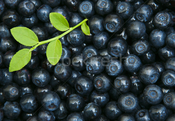 Blueberries Stock photo © Es75