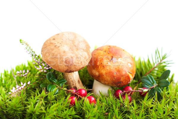 Erdő gombák moha étel nyár piros Stock fotó © Es75