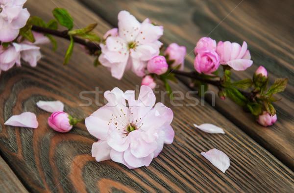 Stock fotó: Sakura · virág · rózsaszín · öreg · fából · készült · virágok
