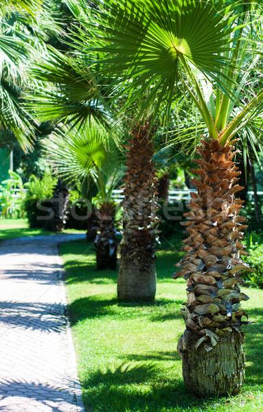 Stok fotoğraf: Tropikal · palmiye · ağaçları · ağaç · doğa · manzara · sokak