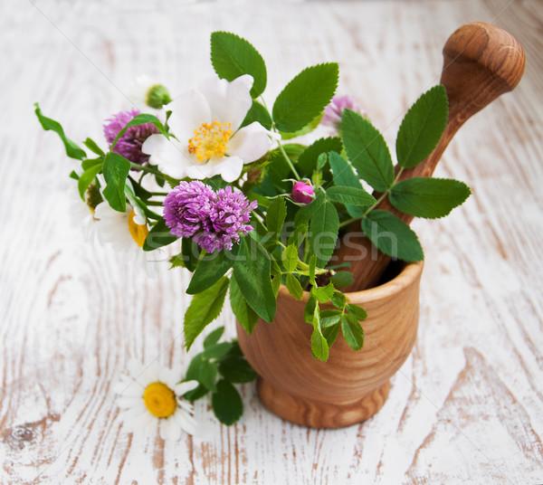 Vad virágok gyógynövények fa tavasz természet szépség Stock fotó © Es75