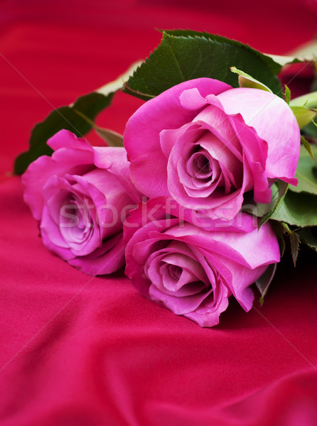 Roses on satin background Stock photo © Es75