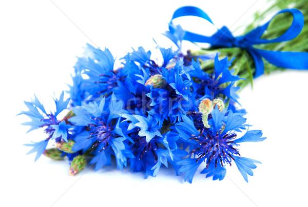 Niebieski chaber bukiet biały charakter piękna Zdjęcia stock © Es75