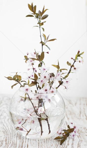 Cherry blossom Stock photo © Es75
