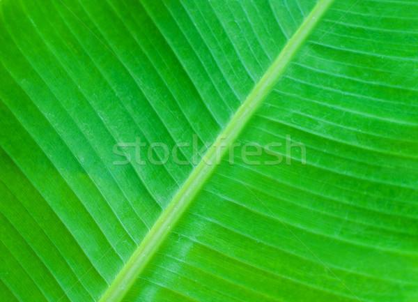 Vert feuilles de palmier arbre forêt résumé nature Photo stock © Es75