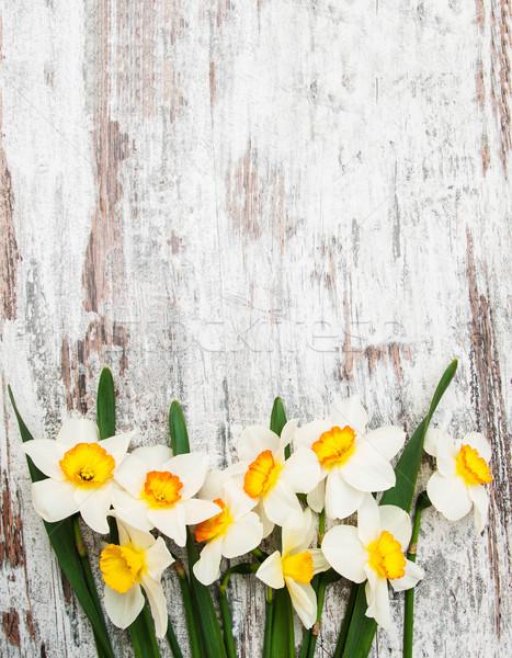 Narcisos fronteira abrótea flores páscoa Foto stock © Es75