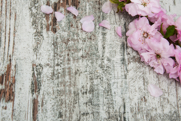 Sakura blossom on a old wooden background Stock photo © Es75