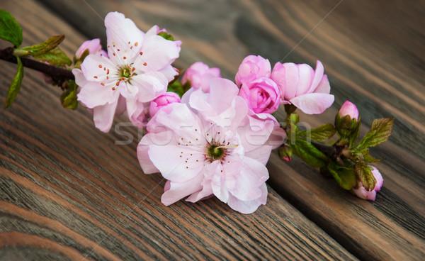 Sakura fiore rosa vecchio legno fiori Foto d'archivio © Es75