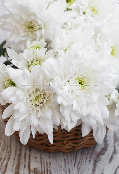 Biały chryzantema koszyka kwiat charakter Zdjęcia stock © Es75