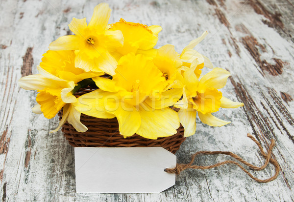 Narcisos cesta amarelo vazio membro velho Foto stock © Es75
