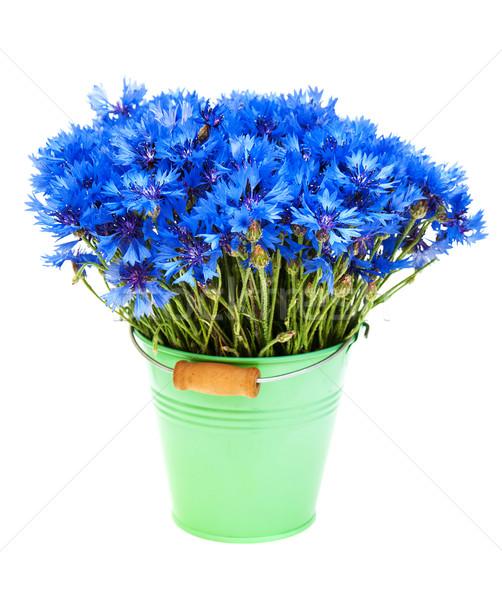 Blauw geïsoleerd witte bloem natuur schoonheid Stockfoto © Es75