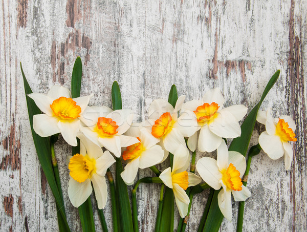 Daffodil цветы старые цветок весны Сток-фото © Es75