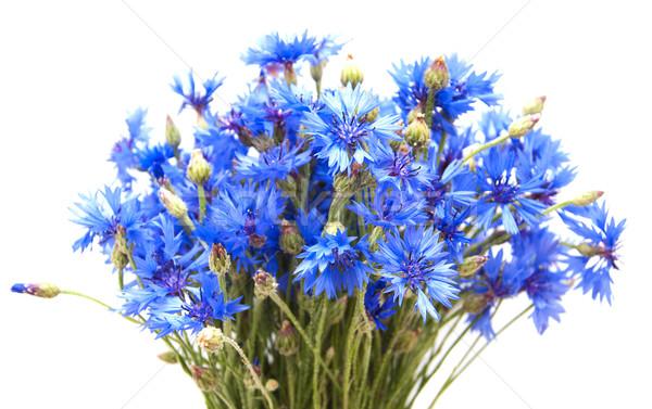 букет синий цветы лист красоту лет Сток-фото © Es75