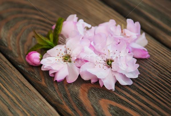 Sakura blossom Stock photo © Es75