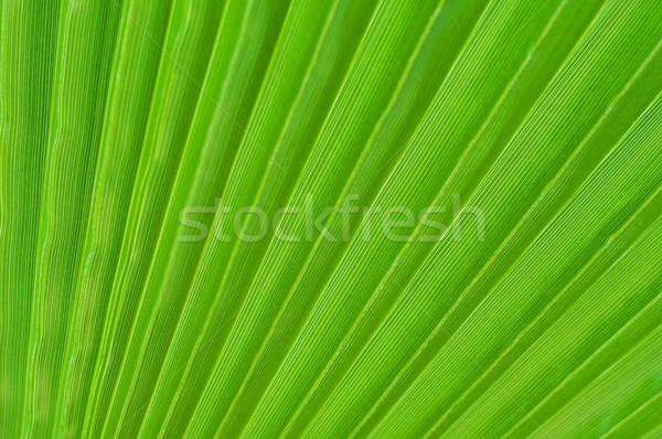 Zöld pálmalevelek fa erdő absztrakt természet Stock fotó © Es75