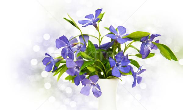 Blue Perwinkle flowers  Stock photo © Es75