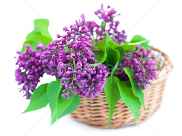 Ramo lila cesta blanco flor naturaleza Foto stock © Es75