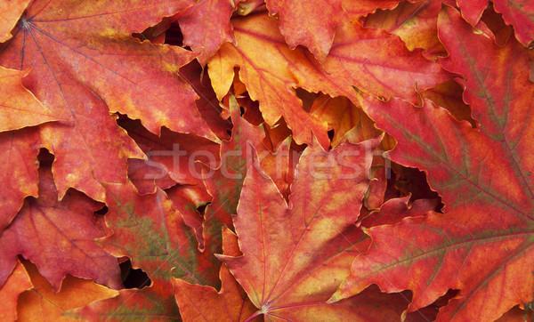 Mélange automne arbre résumé nature Photo stock © Es75