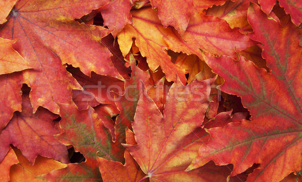 Mixture of Autumn leaves Stock photo © Es75