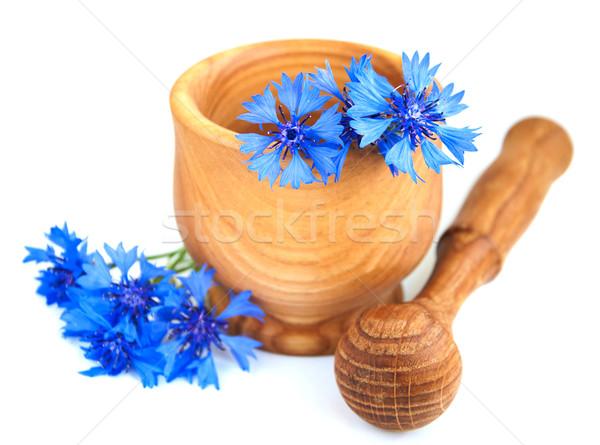 Liści zielone niebieski roślin biały bukiet Zdjęcia stock © Es75