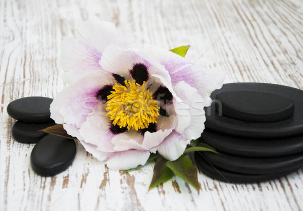 Сток-фото: Spa · камней · цветок · природы · красоту