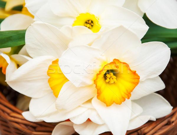 Stockfoto: Mand · narcissen · witte · narcis · bloemen
