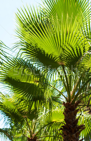 Trópusi pálmafák fa természet tájkép utca Stock fotó © Es75