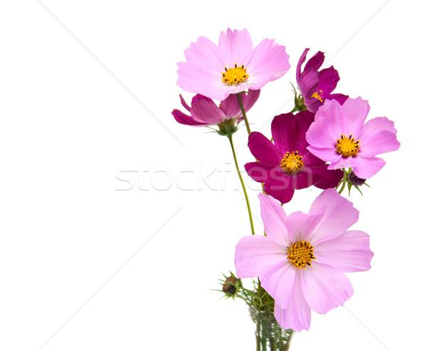 Cosmos flowers Stock photo © Es75