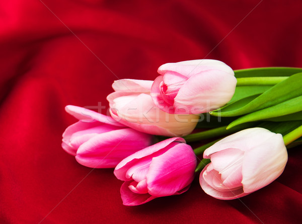 tulips on a red silk Stock photo © Es75