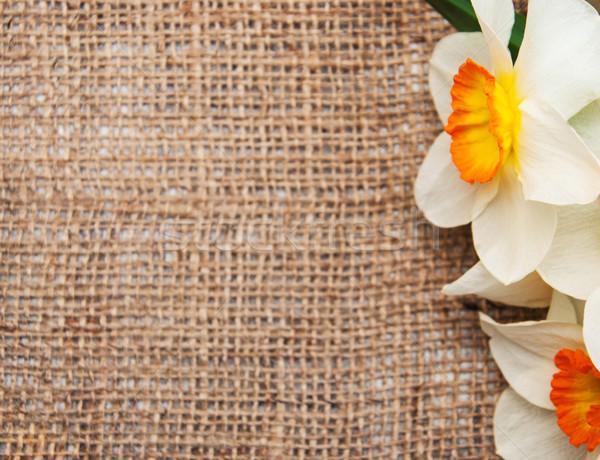 Abrótea flores pano de saco amarelo tecido páscoa Foto stock © Es75