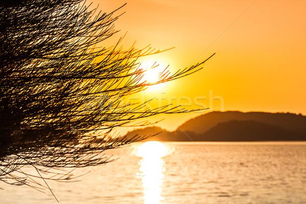 Zonsondergang strand boom natuur landschap Stockfoto © esatphotography