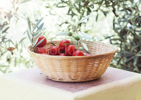 Vers tomaten olijfboom natuurlijke voedsel blad Stockfoto © Escander81
