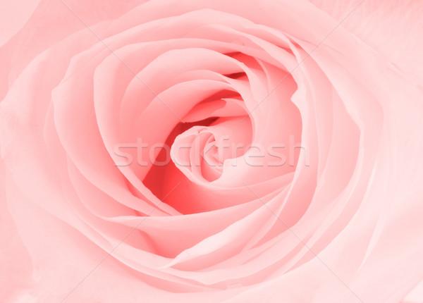 белый закрывается мнение голову цветок Сток-фото © Escander81