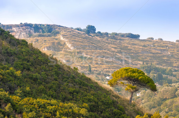 Stock photo: Tree on green hill in rural southern Italy